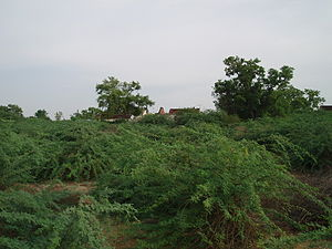 Ungampalayam - Thorn Infested
