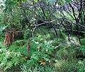 Odiorne Point State Park (246732420).jpg