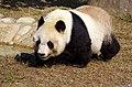 Oji zoo, Kobe, Japan (38330216422).jpg