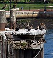Old pier (6223355776).jpg