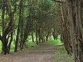 Oldlands Wood - geograph.org.uk - 550995.jpg