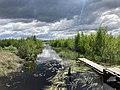 Olmanskie swamps in Belarus - May 2021 01.jpg