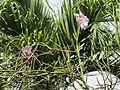 Orchids (7189139611).jpg