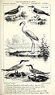 Ornithologie de la Savoie, ou, Histoire des oiseaux - qui vivent en Savoie a l'état sauvage soit constamment, soit passagèrement (1853) (14751157682).jpg