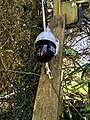 Outdoor wireless security camera at Nuthurst, Sussex 1.jpg