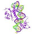 PBB Protein SRF image.jpg