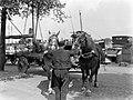 Paarden van de Heineken Brouwerij in Amsterdam, Bestanddeelnr 189-0521.jpg