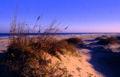 Padre Island National Seashore - sand dunes.jpg