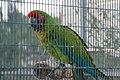 Paphos Zoo, Cyprus - panoramio (50).jpg