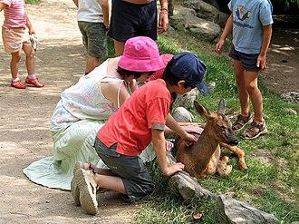 Pyrénées Animal Park - Image: Parc animalier pyrenees 6