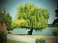 Parcul Herastrau (9466214720).jpg
