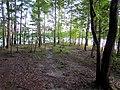 Parkers Creek Jordan Lake NC SP 3824 (36009141391).jpg
