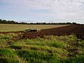 Partly ploughed field - geograph.org.uk - 61197.jpg