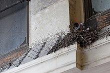 Bird control spike - Wikipedia