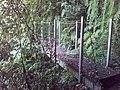 Passerelle sur le sentier de takamaka - panoramio.jpg