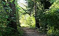 Path In The Forest (87682823).jpeg