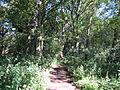 Path in Storeton Woods - IMG 0949.JPG