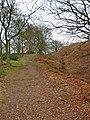 Path on Kinver Edge - geograph.org.uk - 1702116.jpg