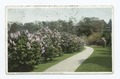 Pathway and Lilacs, Arnold Arboretum, Boston, Mass (NYPL b12647398-70033).tiff