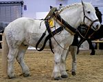 Lista de Animales Disponibles 150px-Percheron_3_stehend_rechts