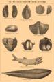 Permian fossils.jpg