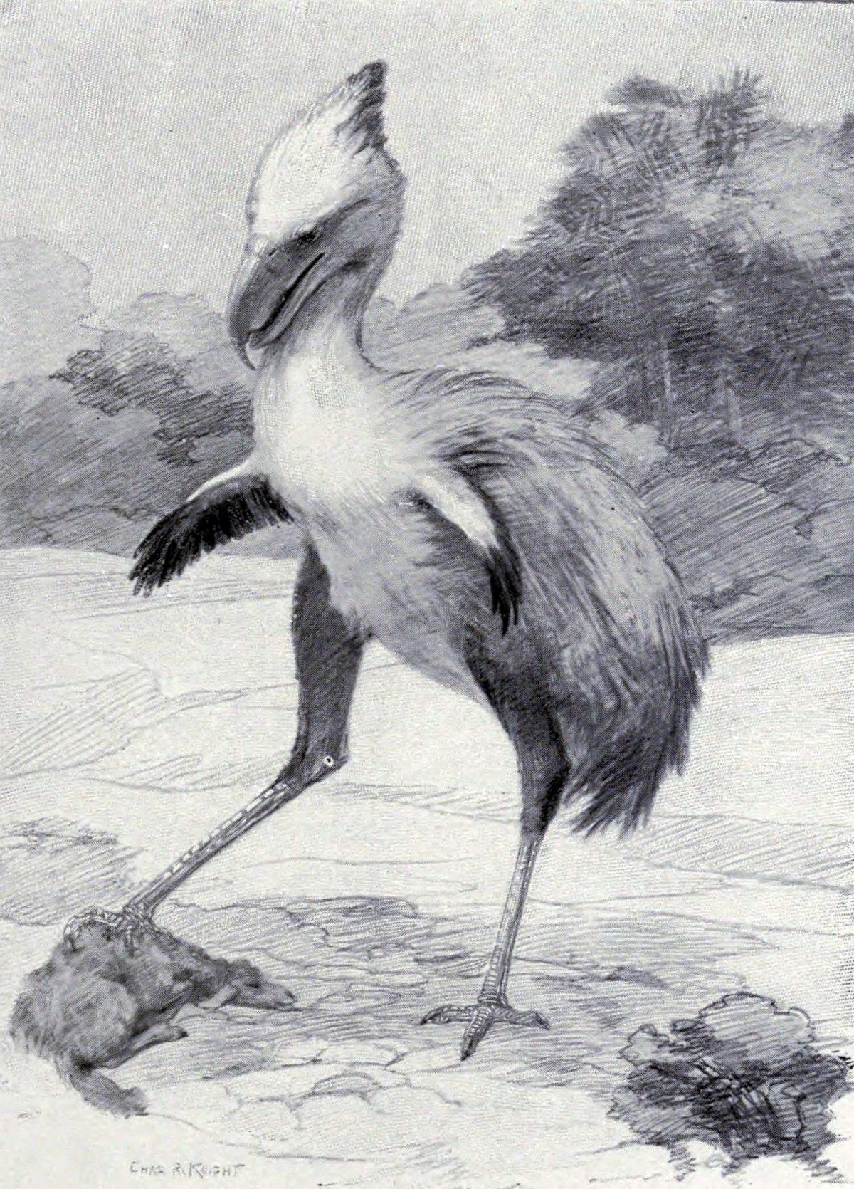 Phorusrhacos.jpg
