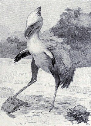 Phorusrhacos - Restoration by Charles R. Knight, 1901