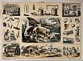 Pigs and a litter of piglets, surrounded by vignettes showin Wellcome V0025314.jpg
