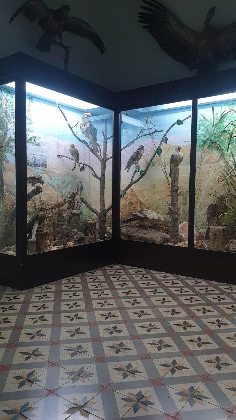 מוזיאון הטבע ירושלים