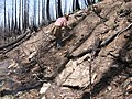 Planter working on the Tahoe NF (3821496968).jpg