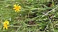 Plants OB 286 (38165732604).jpg