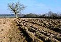 Ploughed field near Leigh - geograph.org.uk - 1216570.jpg