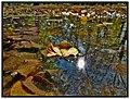 Pocsolya 2 - panoramio.jpg
