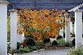 Poitiers - Jardin Blossac (6).jpg