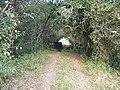 Pontilhão abandonado da E.F.O.M. em meio a vegetação - panoramio.jpg