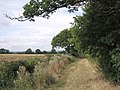 Porter's Ashbed - geograph.org.uk - 50259.jpg