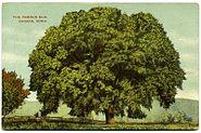 PostcardCanaanCtFamousElm19081914