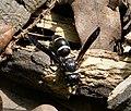 Potter Mason Wasp (26786972399).jpg