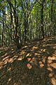 Prírodná rezervácia Borsukov vrch, Národný park Poloniny (16).jpg