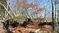 Pramdrager stien - panoramio.jpg