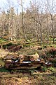 Pressmennan Wood - log seat with melting snow - geograph.org.uk - 753160.jpg
