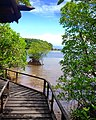 Puerto Galera's Mangrove Park - panoramio.jpg