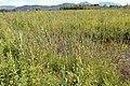 Réserve naturelle Marais Lavours Aignoz Ceyzérieu 65.jpg