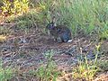 Rabbit 297.jpg