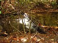 Rabun County, GA, USA - panoramio - srbullock (2).jpg