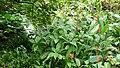 Rainforest Biome @ Eden Project (9757309091).jpg