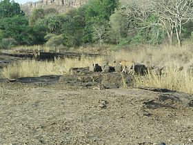 Ranthambore at once.jpg
