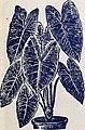 Rare Florida flowers and fruits (1902) (19942547814).jpg