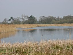 Redgrave and South Lopham Fen.jpg