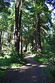Redwood Memorial Grove 23 2017-06-12.jpg